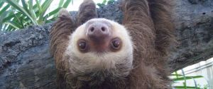 Toward a Spirituality of Sloths
